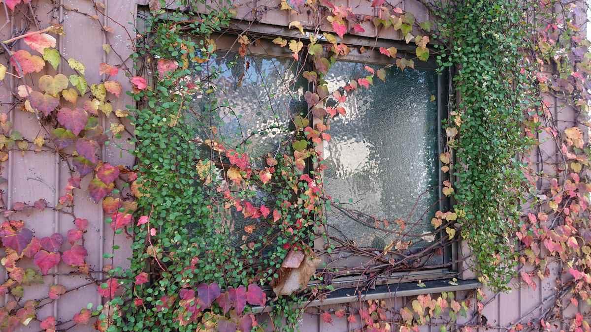 緑と一体化しつつある窓